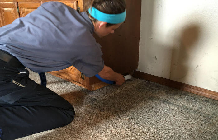 going the extra mile as carpet cleaners in springfield mo