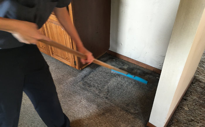 scrubbing the carpets to loosen the soiled areas